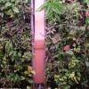 Passive Vertical Garden in EUITA building (U.S.)